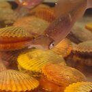 shells by Soxy Fleming