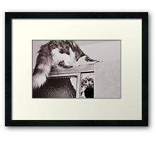 Moments With Max... Framed Print