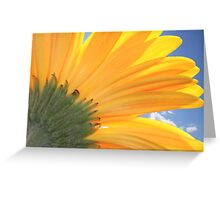 A Daisy Welcoming The Sky Greeting Card