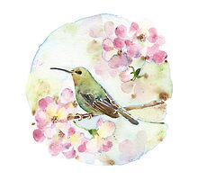 Watercolor | Hummingbird and PinkRose by jjsgarden