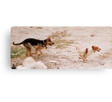 Chase! Canvas Print