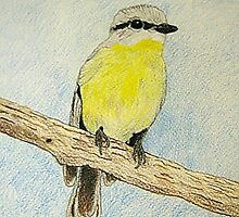 Eastern Yellow Robin drawing by Shane Meyer