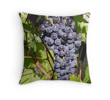 Ripe Sangiovese grapes, Umbria, Italy Throw Pillow