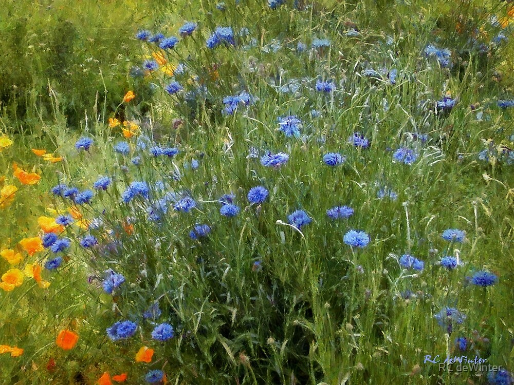 Bachelor's Meadow by RC deWinter