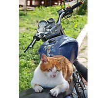 Ginger and White Tabby Cat Sunbathing on A Motorcycle Photographic Print