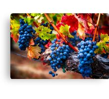 Fruit of Napa Valley I Canvas Print