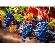 Fruit of Napa Valley I Photographic Print