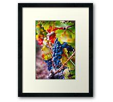 Fruit of Napa Valley II Framed Print