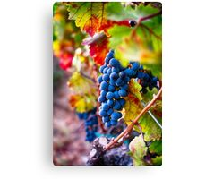 Fruit of Napa Valley II Canvas Print