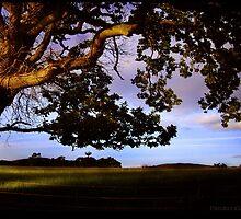Evening by Anita Joy Holland