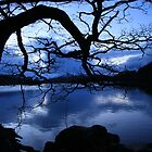 crooked tree by arkaig. by highlandscot