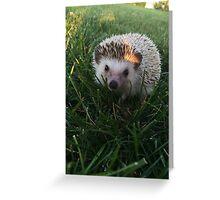 Loki the Hedgehog  Greeting Card