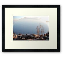 Beached Cypress Framed Print