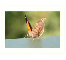 Cheeky moth Art Print