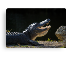 Basking 'Gator Canvas Print