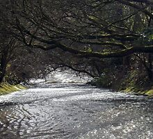 Just down from Eller Beck at Harrington Nature reserve by amylw1