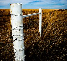 White Fence by Jenny Ryan