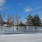 Fence In The Tree's by Linda Miller Gesualdo
