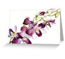 Radiant Orchids: Magenta Dendrobiums Greeting Card
