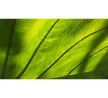 Leaf Photographic Print