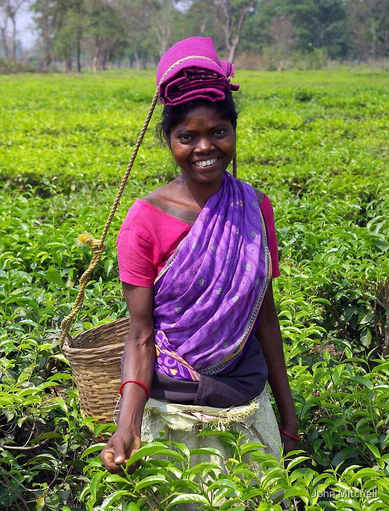 Tea garden picker, Manas, India by John Mitchell