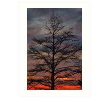 Sunset Cypress Art Print