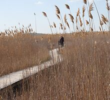 On The Boardwalk At Plum Island by Doug Wilkening