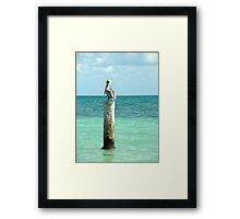 pelican post Framed Print