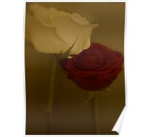 Red Rose Yellow Rose Poster