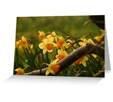 Daffy in the Woods Greeting Card