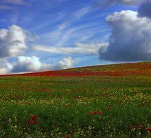Poppy Fields by Davedinho