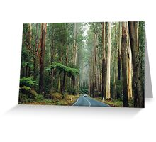 Black Spur, Yarra Ranges, Victoria. Greeting Card