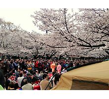 Ueno Park hanami, March 2013 : Photo Friday at meauxtaku.com Photographic Print