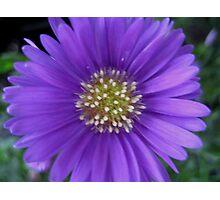 Purple Passion #1 Photographic Print