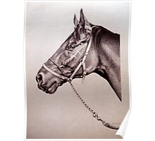 Sir Alfred - Racehorse Poster