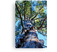 Gloucester tree Canvas Print