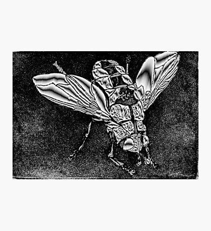 Metallica Fly Photographic Print