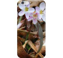 Fairie Spuds iPhone Case/Skin