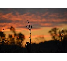 Fall Sunset  Photographic Print