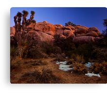 Last Light, Joshua Tree Canvas Print