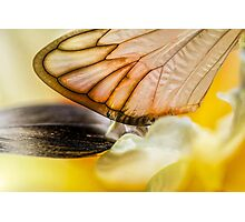 Cling to Spring Photographic Print