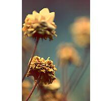 Indie Photographic Print
