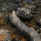 Oysters Naturelles 2 by beeden