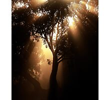 Sunrise & Mist Photographic Print