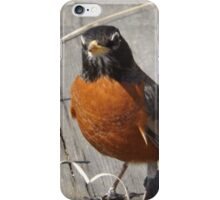 Robin on the High Line, New York City's Elevated Garden and Park iPhone Case/Skin