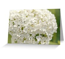 Anabelle Hydrangea Greeting Card
