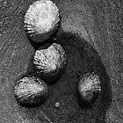 Seashells by RHarbron