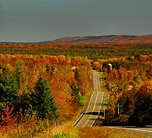 Back Roads in Eastern Maine by Alana Ranney