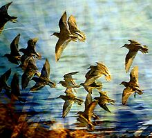 """"""" SANDPIPERS """" Marlo Vic. by helmutk"""