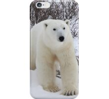Polar Bear Coming out of the Arctic Willow iPhone Case/Skin